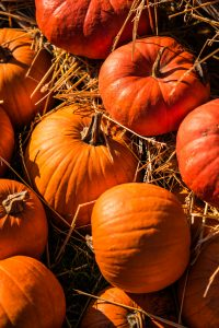 favorite pumpkin pie recipe realtor candis carmichael - pumpkins